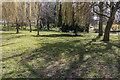TQ3092 : Willow Trees, Broomfield Park, London N13 by Christine Matthews