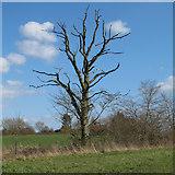 TM3984 : Dead tree on field boundary, Redisham by Roger Jones