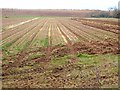 NT8169 : Field of onions at Old Cambus East Mains by Oliver Dixon