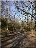 SX7879 : Footpath in Pullabrook Wood by David Smith