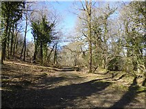 SX7778 : Forest access track in Yarner Wood by David Smith