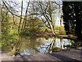 SD8204 : Pond in the Dell at Heaton Park by David Dixon