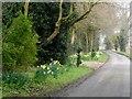 SP9302 : Hollow Way, Near Chesham by Bikeboy
