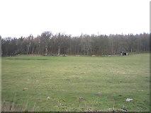 NY9650 : Grazing towards woodland, Blanchland by JThomas