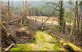 NN3231 : Grassed way through coniferous plantation by Trevor Littlewood