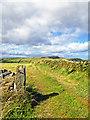 NZ9302 : Field Tracks by Scott Robinson