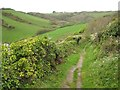 SX1651 : The coast path in West Coombe by Philip Halling