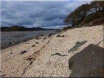 NX8354 : Cockle shell beach at Kippford by Gordon Brown