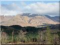 NN1526 : Coniferous plantation near to Dalmally by Trevor Littlewood