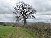 SS8403 : Track from Bremridge Farm to Upton Hellions by David Smith