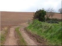 SS8502 : Track from Haske to Bradley Farm by David Smith