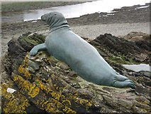 SX2553 : Nelson the seal by Philip Halling