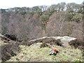 SE1239 : Millstone grit outcrop, Shipley Glen by Christine Johnstone