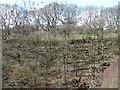 SE1239 : Shadows in Broadstone Wood, Shipley Glen by Christine Johnstone
