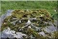 SU5983 : Moss round the Cross by Bill Nicholls