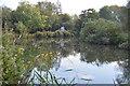 SU5866 : River Kennet by N Chadwick