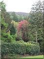 SH6518 : A splash of pink at Farchynys Cottage Garden by Eirian Evans
