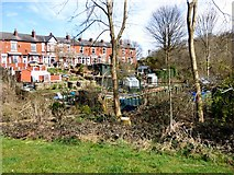 SJ9594 : Swains Valley Allotments by Gerald England