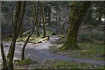 SH7326 : Path parallel to the Afon Mawddach by Nigel Brown