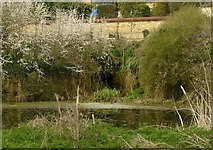 SP9599 : Barrowden Mill site, tailrace pond by Alan Murray-Rust