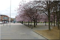 NS5964 : Blossom on Saltmarket by DS Pugh