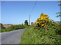 SM7425 : Gorse on the road to St Justinians by Jeff Gogarty