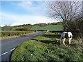 SJ3203 : The B4499 looking towards Leigh by Humphrey Bolton