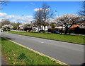 ST3091 : Spring blossom, Malpas Road, Newport by Jaggery