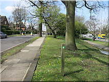 TQ2589 : Dollis Valley Greenwalk by Des Blenkinsopp