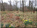 NY4577 : Woodland adjacent to the church, Nicholforest by Jonathan Thacker