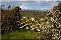 SW6523 : Blossom and gate on the track from Chyvarloe to Loe Bar by Christopher Hilton