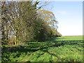 TA0048 : Footpath alongside Beswickheads Plantation by Jonathan Thacker