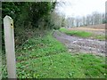 SU9918 : Track near Birch Wood by Peter Holmes