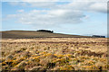 NY4821 : Moss domes on moorland by Trevor Littlewood