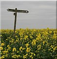 SY6483 : Signpost near Hewish Farm by Becky Williamson