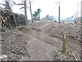 SY0385 : The East Devon Way through an area of felled trees, Bicton by Humphrey Bolton