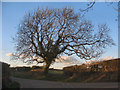 SS8278 : Winter tree beside Moor Lane, nr Nottage by eswales