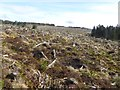 N2805 : Clear-felled forestry in the Slieve Bloom by Oliver Dixon