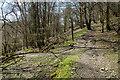 SX4871 : Bridleway to West Down by Guy Wareham