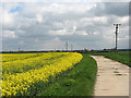 TL5058 : Teversham: the road to the sewage works by John Sutton