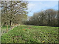 TQ1117 : Copse to east of Thakeham Place by Peter Holmes