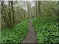 TQ8332 : Wild garlic in Hole Park Gardens by Marathon