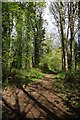TL3706 : Woodland Path in Lee Valley park by Glyn Baker