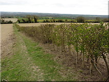 TQ6662 : The North Downs Way near Holly Hill Lodge by Dave Kelly