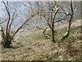 NN4808 : Shore of Loch Katrine by Richard Webb