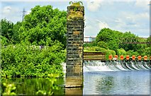 SE3231 : Aire and Calder Navigation Canal, Knowsthorpe, Leeds by Mark Stevenson