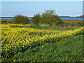 TF9239 : Reservoir near Field Barn, Wighton, Norfolk by Richard Humphrey