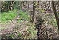 ST2098 : Stream behind Ty-Brachty Terrace, Kendon by M J Roscoe