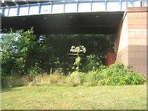 NS5566 : Giant Hogweed beneath the railway bridge over the River Kelvin by Jonathan Thacker
