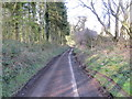TR0049 : Church Lane passing through passing by Church Wood by Peter Wood